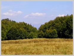 Вершина горы Бужора покрыта высокогорными травами(1083 м.)