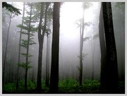 Маршрут к вершине Анталовецкая Поляна проходит через рощу величественных буков