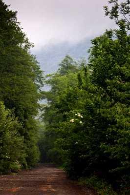 люта карпати закарпаття остап цапулич гори гарні фото