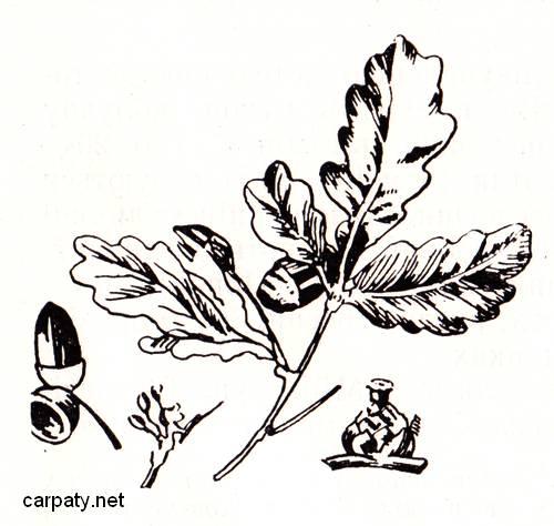 carpaty.net
